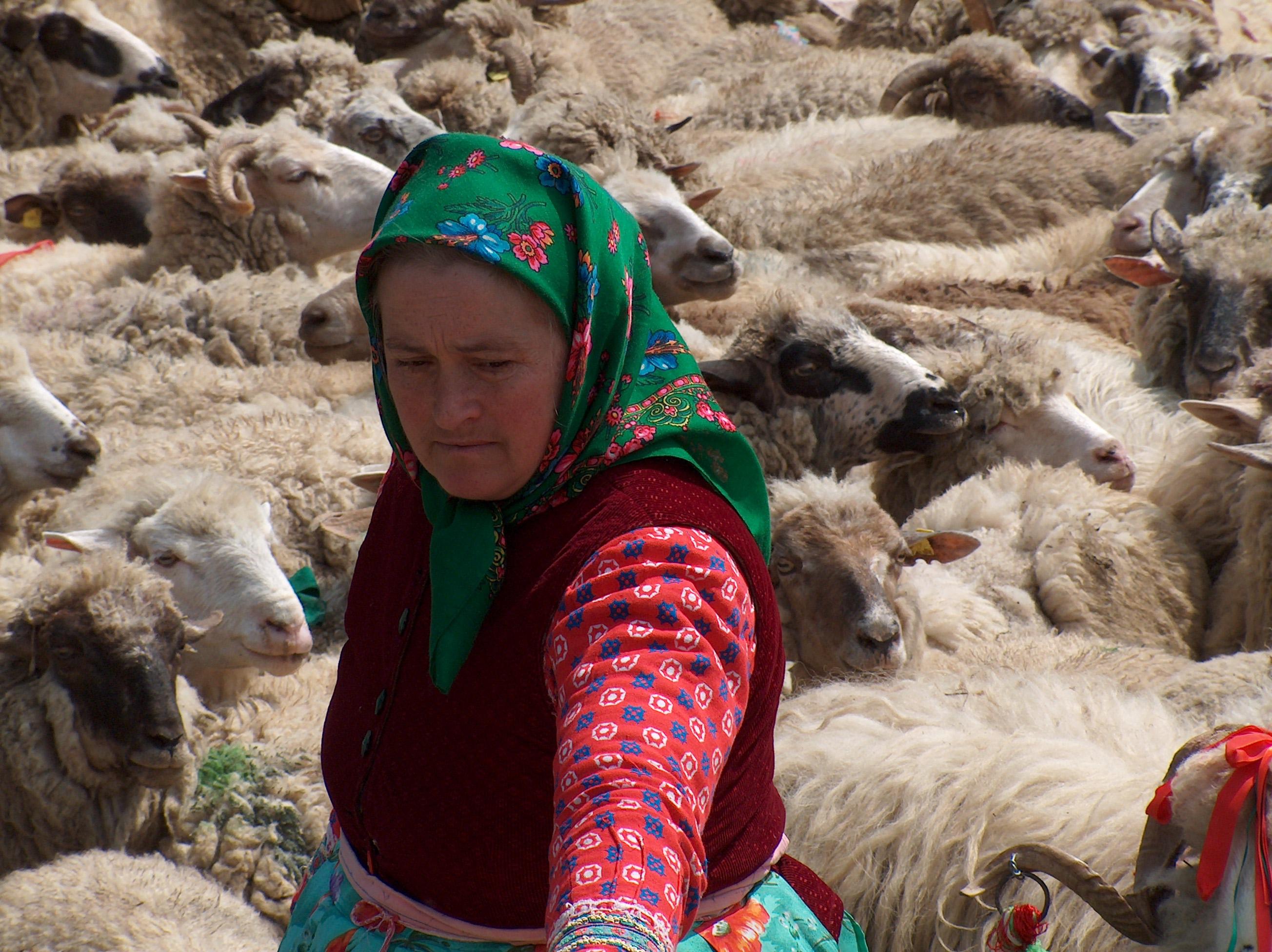 Sheep farming in Szentgyörgy